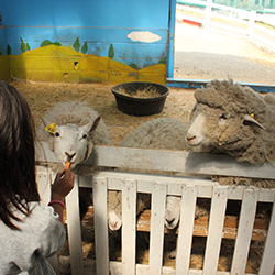 <p>Makaino Farm is a popular destination for families with children.  // © 2014 Monica Poling</p><p>Feature image (above): SkyAsagiri presents a...