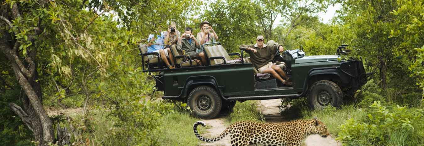 A Safari for the Rest of Us
