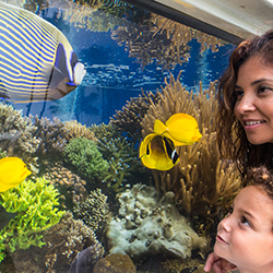 Oahu's many activities and attractions ensure that there's something for everyone inthe family. Fun at the Waikiki Aquarium. // © 2014 O'ahu Visitors...