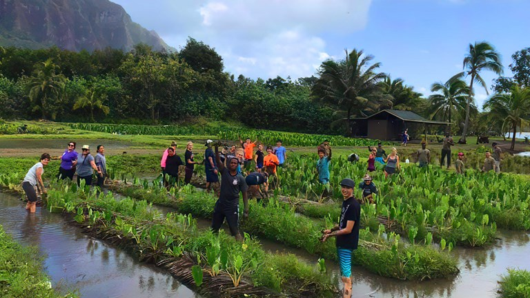 Visitors can take part in a range of voluntourism programs and earn free nights through the Malama Hawaii program.