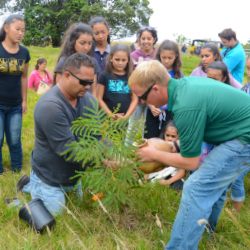 Visitors contributing to the koa tree forest // © 2013 Hawaiian Legacy Tours