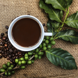 Guests in New York and Toronto can now enjoy Haitian coffee. // © 2013 Thinkstock