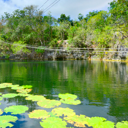 Lily pads and endemic fish entertain cenote swimmers. // © 2013 CanCun Travel