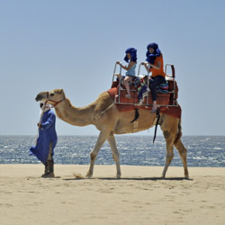 Los Cabos guests can ride camels on Wild Canyon's Camel Quest tour. // © 2014 Los Cabos Tourism Board