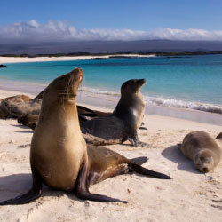 Galapagos Islands // © 2013 Thinkstock