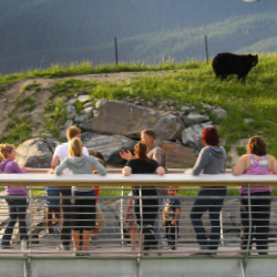 A group of visitors enjoy the new BEARS boardwalk. // © 2014 Alaska Wildlife Conservation Center