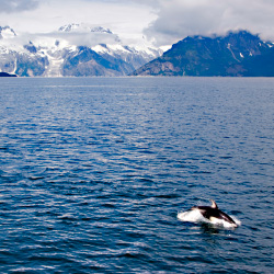 Having an up-close encounter with Orcas is possible at Orca Adventure Lodge. // © 2013 Thinkstock