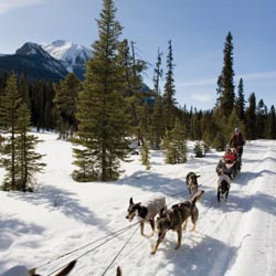 Dog mushing is a great activity for visitors to Western Canada. // c 2013 Banff Lake Louise Tourism/Paul Zizka