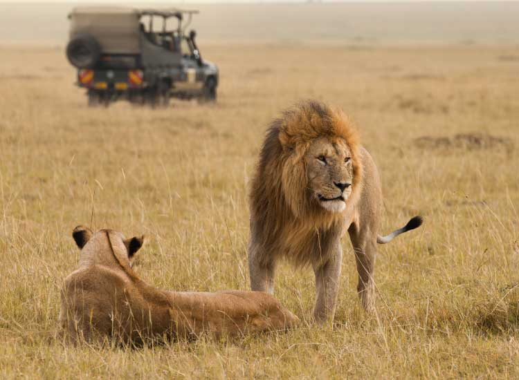 Guided safaris in a mobile 4X4 vehicle are one of many safari options available to travelers. // © 2014 Thinkstock
