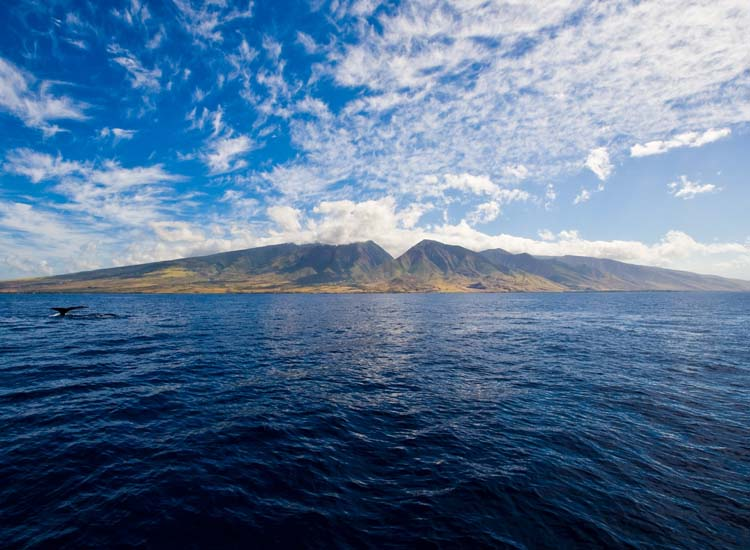 During the winter, spot humpback whales off the shores of Maui. // © HTA/Tor Johnson