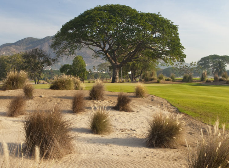 Turtle Dunes is the new 18-hole, championship golf course designed by leading golf architect and craftsman, Tripp Davis. The course is located at The Fairmont Acapulco Princess. // (c) 2013 Turtle Dunes Country Club