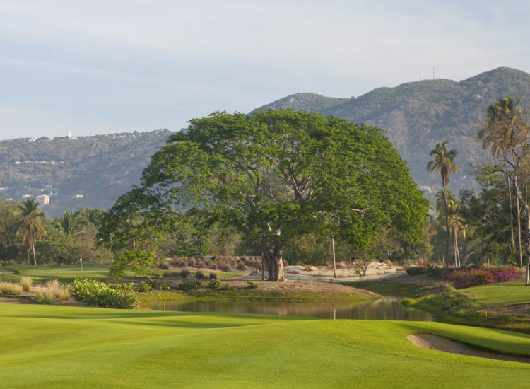 Set among ocean sand dunes and surrounded by a lush tropical sanctuary, the course showcases expansive water features and towering parota trees that frame 18 signature holes. // (c) 2013 Turtle Dunes Country Club