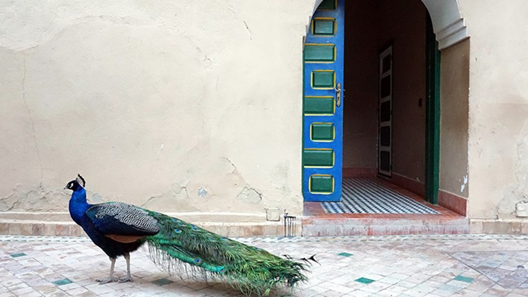 A feathered friend at 19th-century Palais Riad Hida, located in Oulad Berhil // © 2018 Valerie Chen