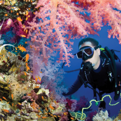 Families can bond over experiences and sights that are unique to scuba. // © 2013 Thinkstock
